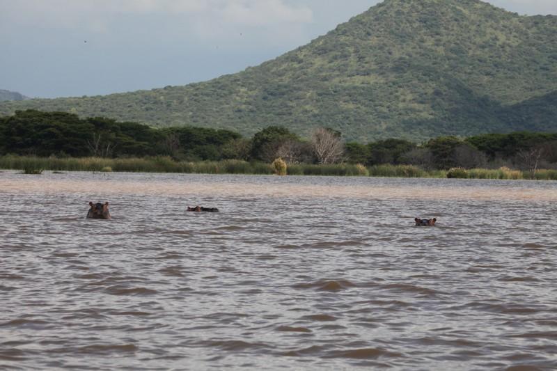 hippo, chamo gölü