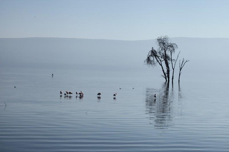 kenya, nakuru gölü, kenya müzikleri, dünya müzikleri