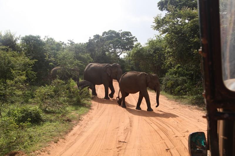 sri lanka filleri